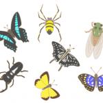 肉類蛋白質に代替するための,昆虫生産数のシミュレーション